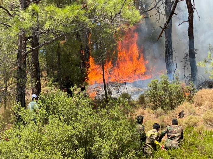 Death toll from Turkey's forest fires rises to 7