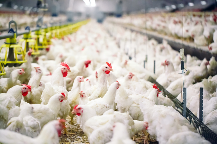 Azerbaijan restricts poultry import from Russian enterprise