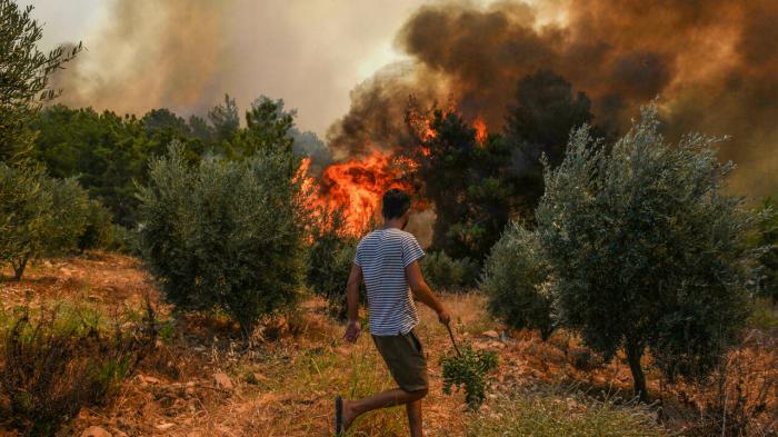 Suspected person on forest arsons case detained in Turkey - Erdogan