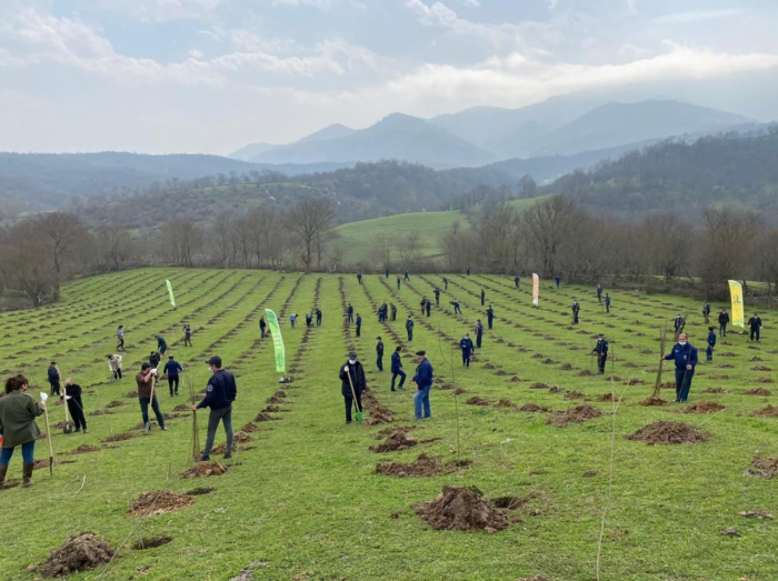 More than 58,000 trees planted in over 70 cities and regions of Azerbaijan on Remembrance Day