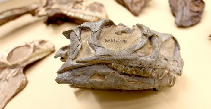 Britaniyada yeni dinozavr növlərinin qalıqları tapılıb