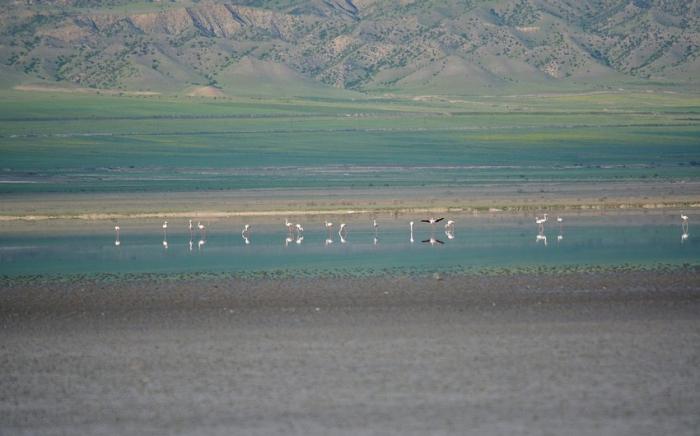 Acınohur gölünün 4/1 hissəsi quruyub