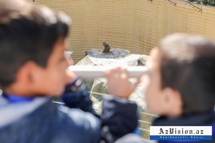 Zooloji Parkın ilk ziyarətçiləri uşaqlar oldu -    FOTOLAR+VİDEO