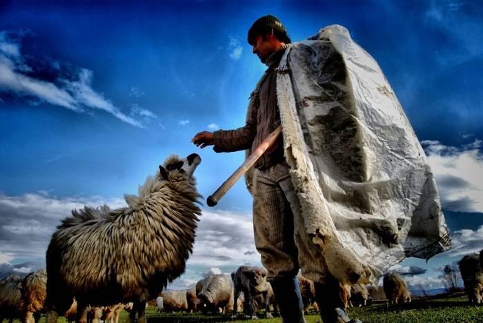 Çoban Habil tutulub