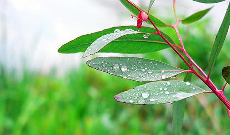 Bu gün də yağış gözlənilir