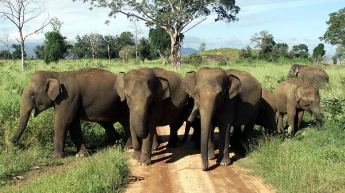 Donald Trump legt Entscheidung zu Einfuhr von Elefanten-Trophäen auf Eis