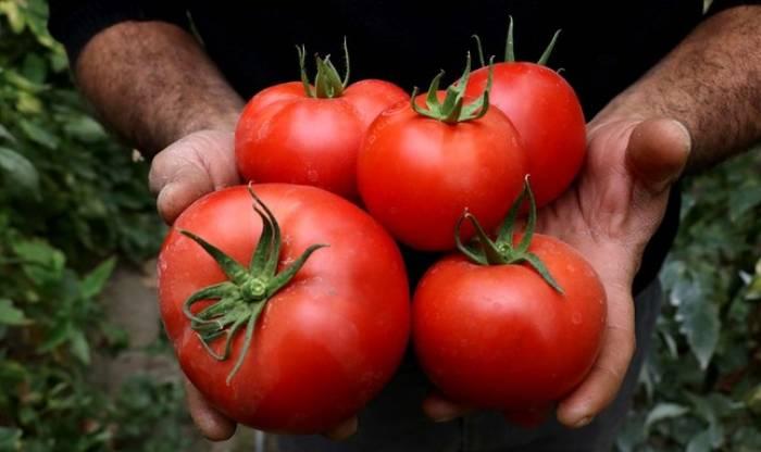 Ab Dezember startet Russland Import von türkischen Tomaten