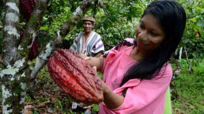 Fast 400 neue Arten im Amazonas-Gebiet gefunden