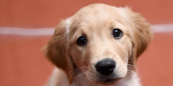 US: mort dupremier chien testé positif au coronavirus