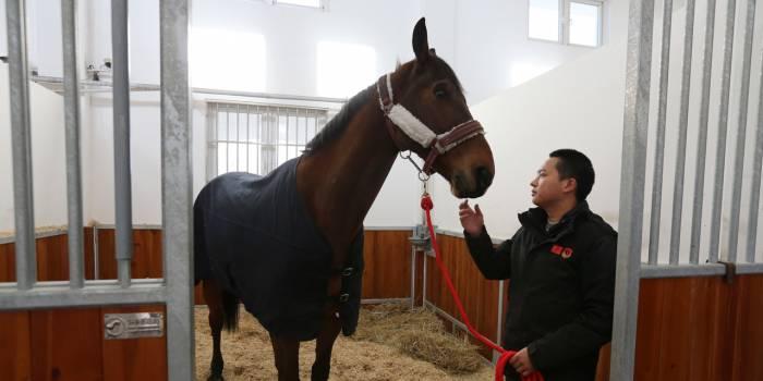 Chine : 30 jours de quarantaine pour le cheval de Macron