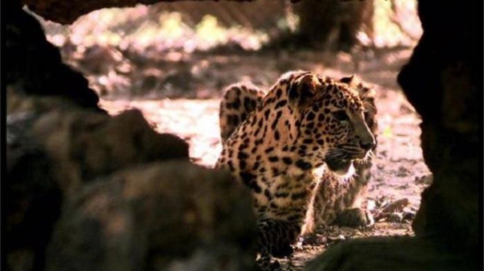 Poaching increases in Asia, Africa amid coronavirus lockdowns