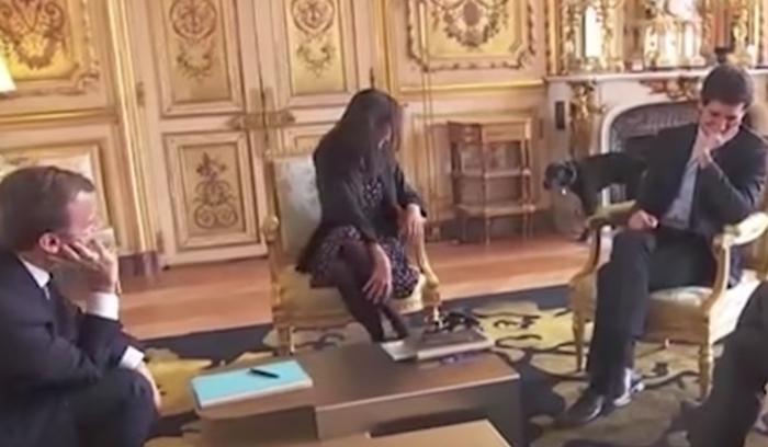 Macron's dog interrupts meeting - NO COMMENT