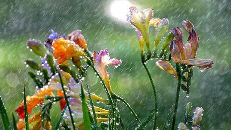 Yağış yağacaq, şimşək çaxacaq