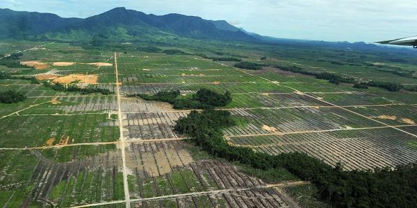 Finalement, l`Assemblée renonce à surtaxer l`huile de palme
