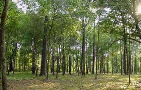 Ağstafada meşə sahələri genişləndirilir