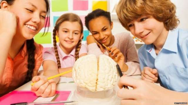 Teenage brains 'not wired for high stakes'