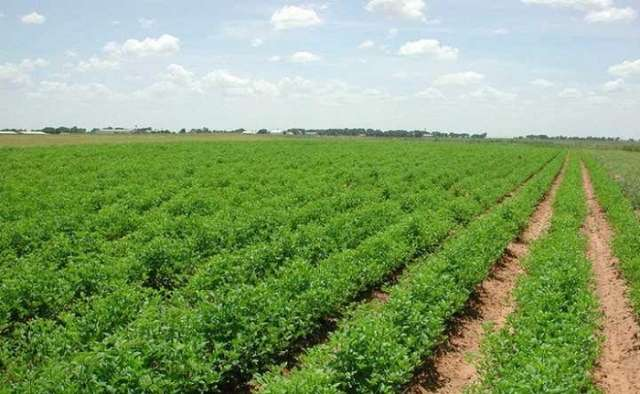 Azerbaijani Agency for Agricultural Credits & Development eyes to increase loan portfolio