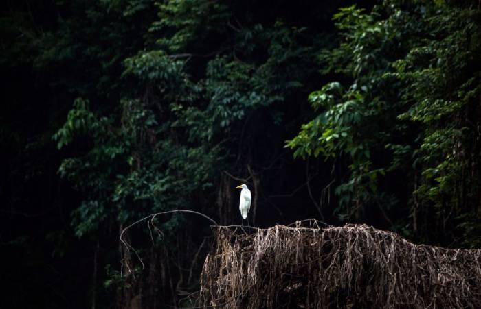 Amazonie: 400 nouvelles espèces découvertes