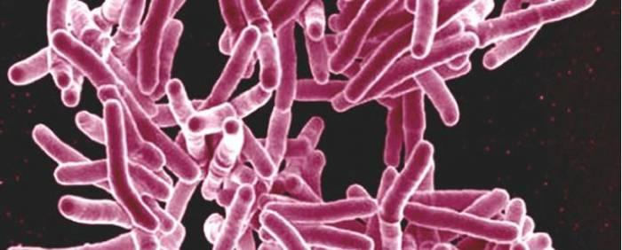 Découverte d'un antibiotique efficace contre des bactéries résistantes