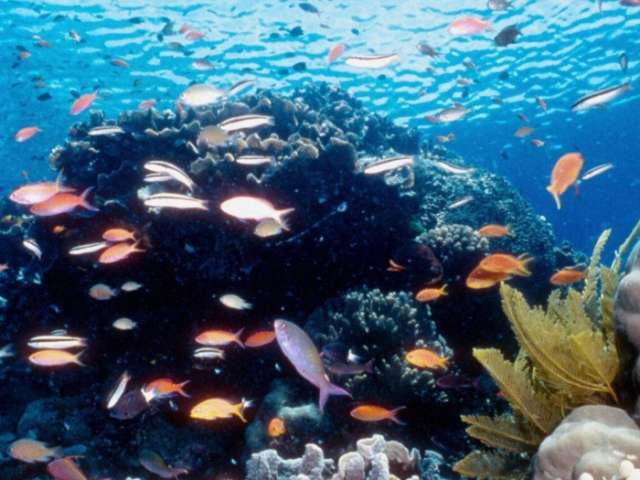 Scientists 'artificially breed' coral for Great Barrier Reef