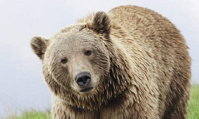 Agent bear: Russia's FSB enlists animals as 'strategic resource'