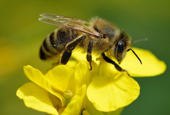 Turns out bees can be right- or left-handed, just like humans