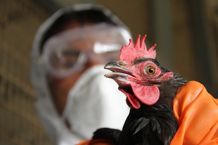 Russia detects first case of H5N8 bird flu in humans