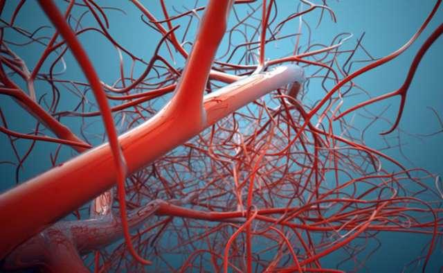 Scientists 3-D print skin that develops working blood vessels
