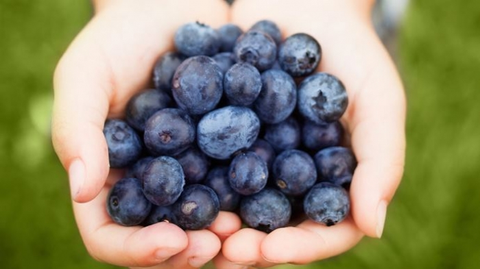 Blueberry extracts can make cervical cancer treatment effective