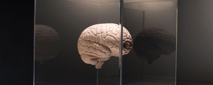 Dos and don`ts to preserve your brainpower