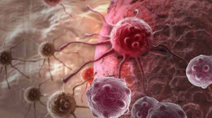 Cancer cells use 'don't eat me' signal to stop immune system attack