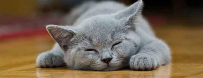 Mardi 8 août 2017, c'est la journée internationale du chat