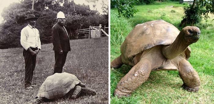 La plus vieille tortue de la Terre est gay