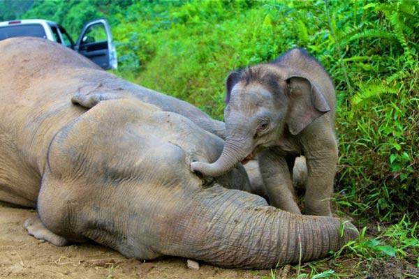 L`Homme commence à prendre au sérieux le massacre des éléphants