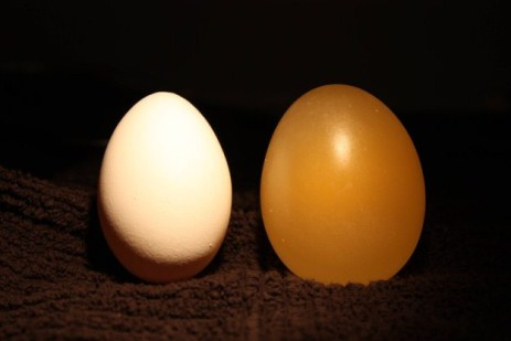 Amazing and funny experiment with egg