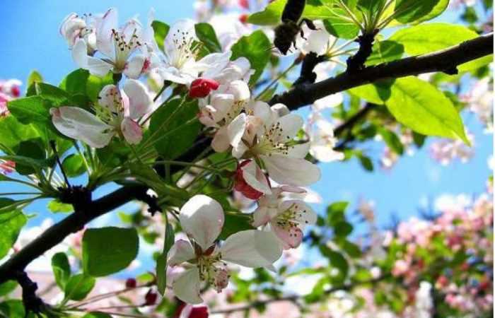 In Aserbaidschan kommt Frühling