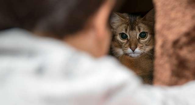 Confirmado por la ciencia: los gatos pueden tener... alergia a los humanos
