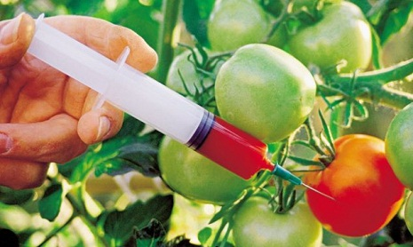 Azerbaijan may imprison GMO distributors