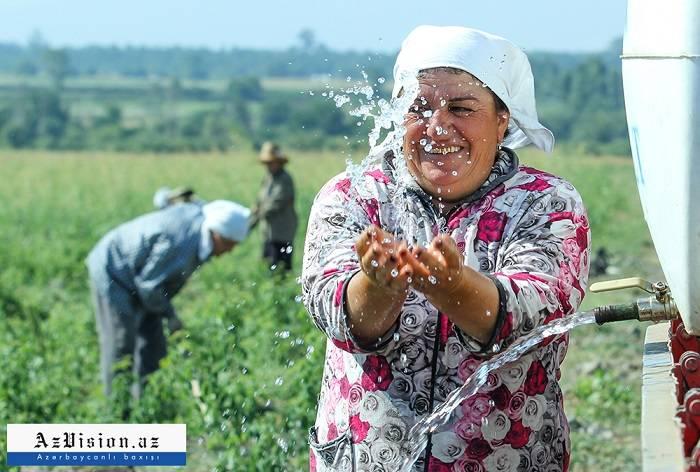 Azərbaycanın qızılgüllər diyarı – Zaqataladan FOTOREPORTAJ