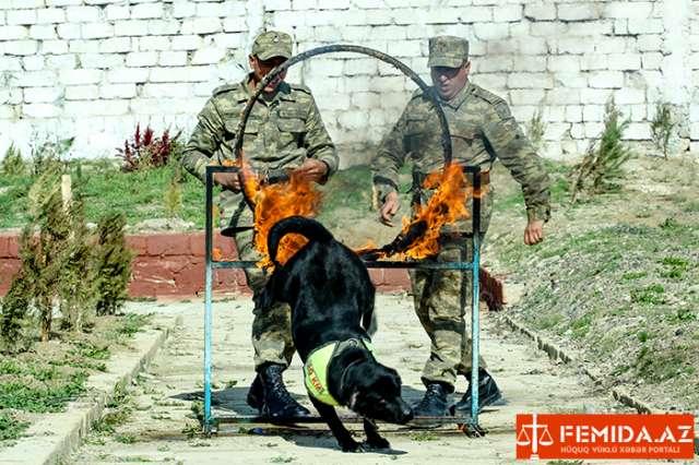 Ordumuzun itləri: Onlara erməni dili də öyrədiləcək – REPORTAJ (FOTO+VİDEO)