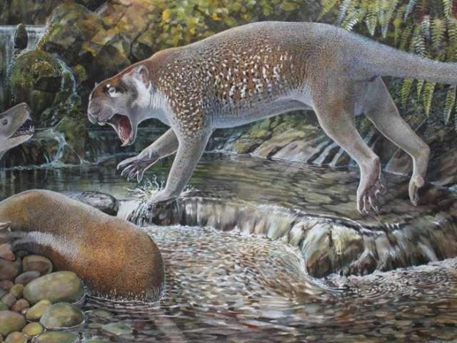 Extinct kangaroo-like lion discovered in Australia
