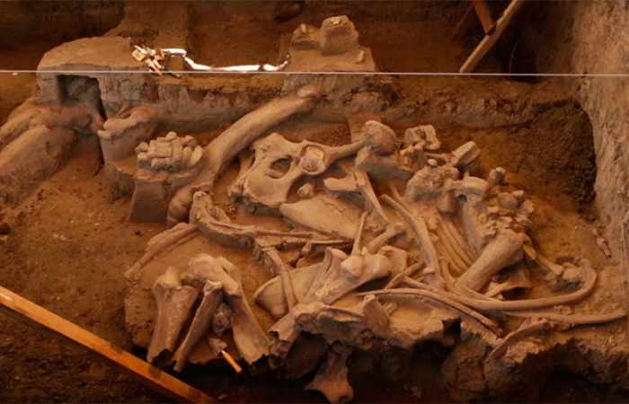 Excavation of 14,000-yo mammoth reveals new information on ancient humans - VIDEO, PHOTOS