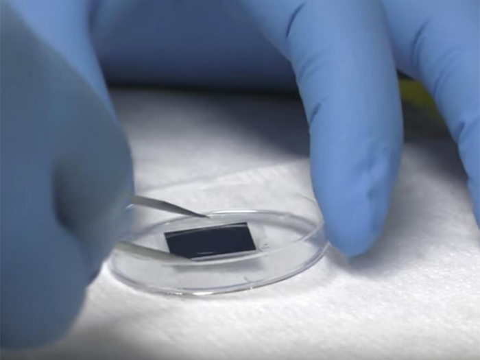 Breakthrough microchip can 'regrow organs and heal wounds'