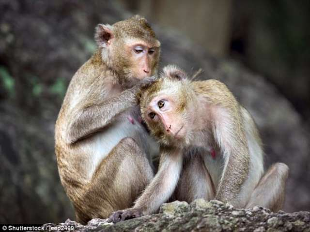 Monkey brain network dedicated to social interactions