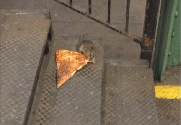 "Die ""Pizza-Ratte"" begeistert New York - VIDEO"