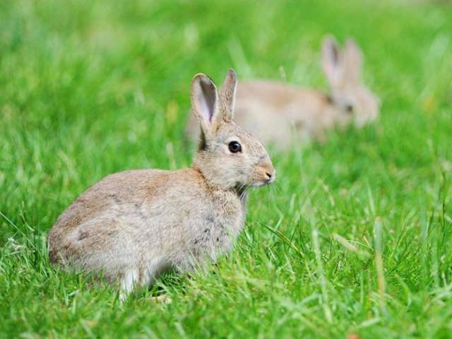 Poland urges citizens to 'breed like rabbits' as birth rate falls