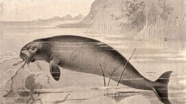 Headless skeleton of extinct sea cow unearthed in Siberia