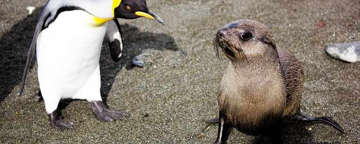 Seals discovered having sex with penguins - VIDEO