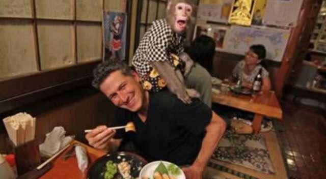 Le singe travaille comme serveur dans ce restaurant japonais