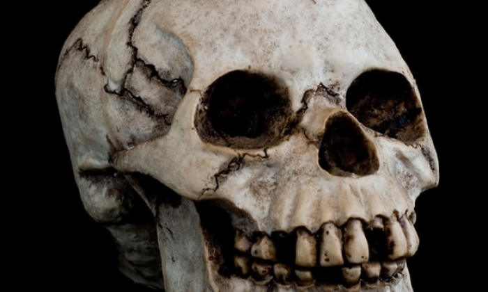 Germany to investigate 1,000 skulls taken from African colonies for 'racial research'